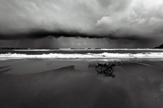 Fotografía artística perros