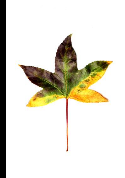 autumn colors 04