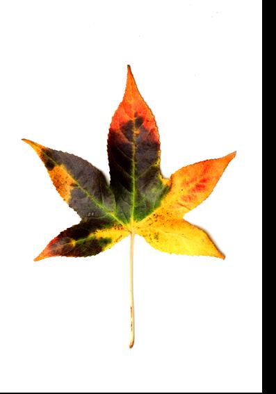autumn colors 05